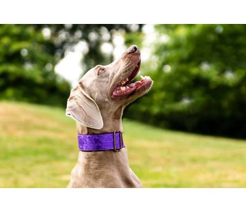 Barcelona Dogs Martingale Dog Collar Brocade Deep Purple