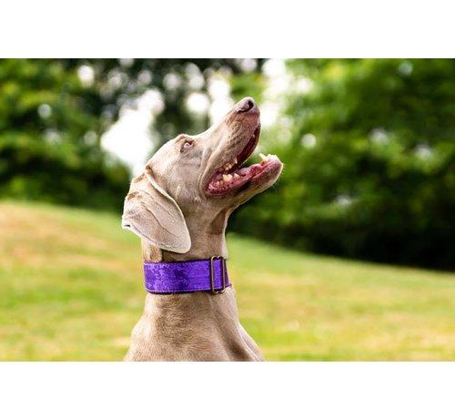 Barcelona Dogs Martingale Dog Collar Brocade Deep Purple
