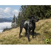 EQDOG Dog Harness Pro Green
