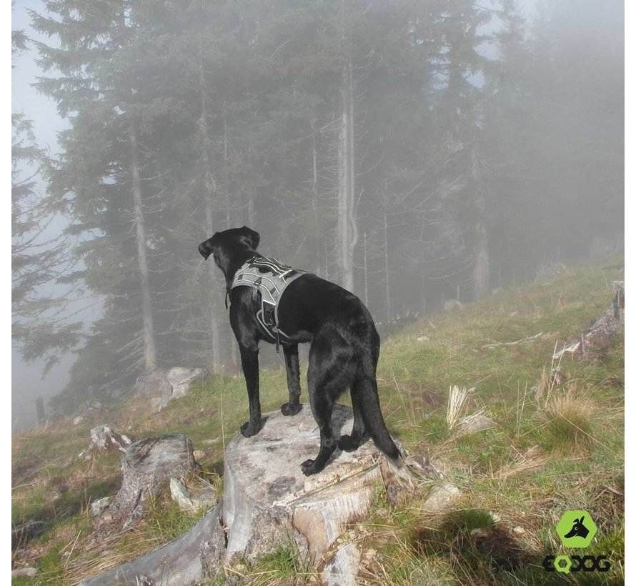 Dog Harness Pro