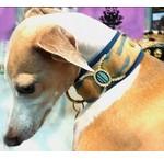 Exclusive dog collars