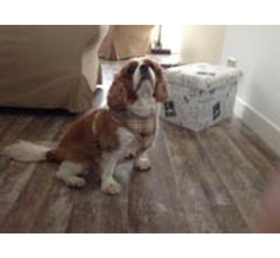 Round Loop Dog Harness Scottish Beige