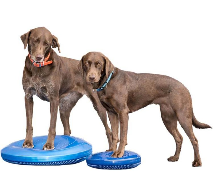 Balance Disk Blauw