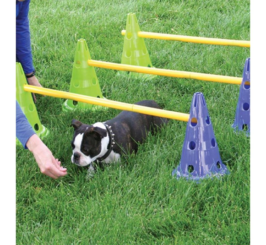 Canine Dog Agility Gym Kit