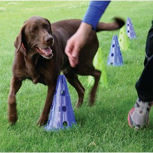 FitPAWS Canine Dog Agility Gym Kit