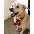 Wagytail Dog Scarf Christmas