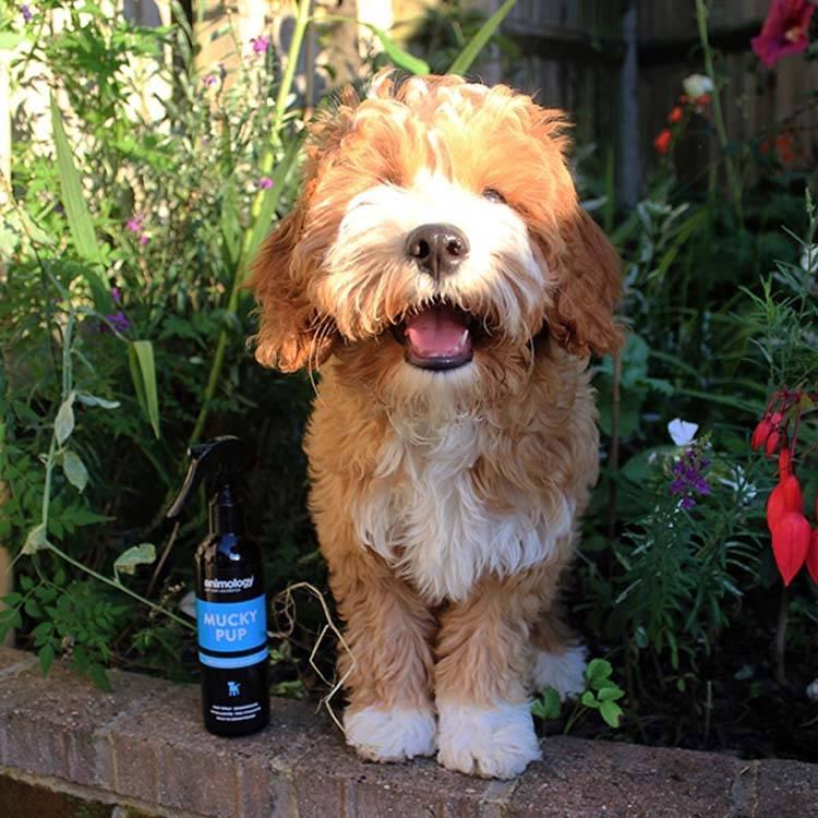 Hondenshampoo Mucky Pup