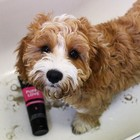 Animology Dog Shampoo Puppy Love
