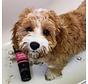 Dog Shampoo Puppy Love