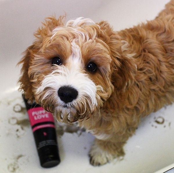 Hondenshampoo Puppy Love