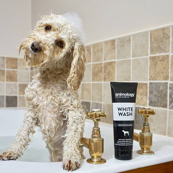Hondenshampoo White Wash