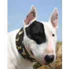 Aqua Coolkeeper Cooling Collar Camouflage