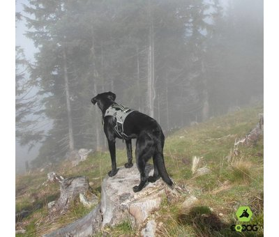 EQDOG Hondenrugzak voor Pro Harness Zwart
