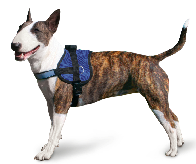 Afbeelding Cooling Survival Harnass Pacific Blue door Petsonline