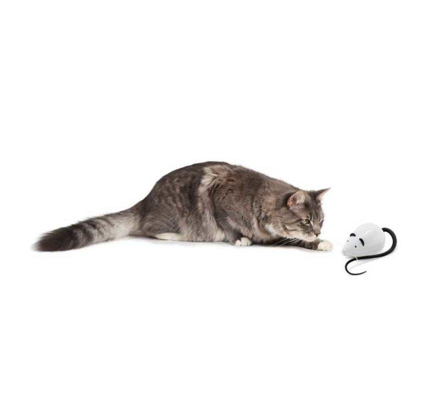 Cat Toy Rolocat