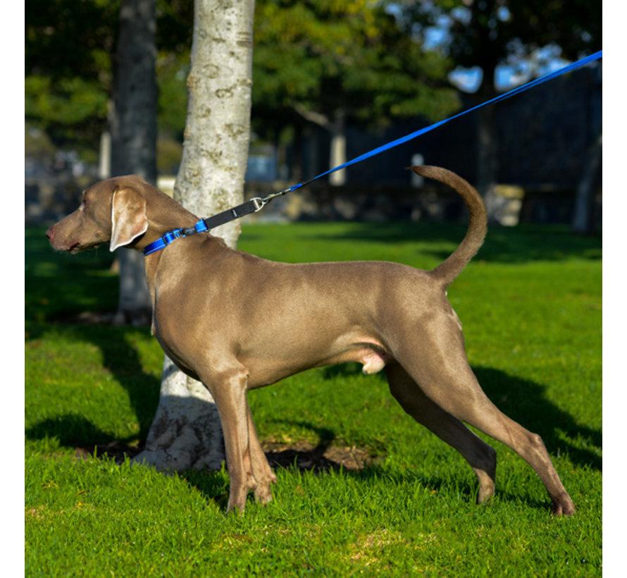 Dog Collar Utility Control Blue
