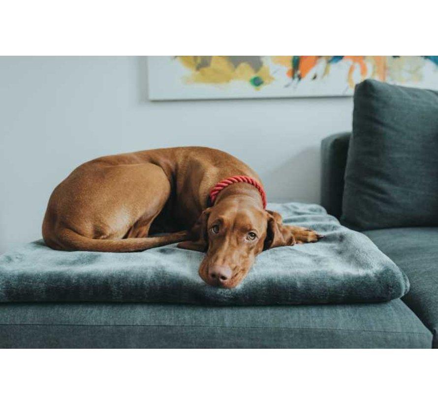 Hondenhalsband List Bordeaux