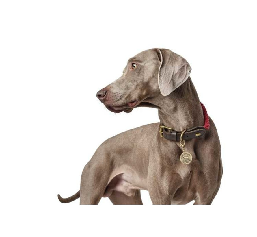 Dog Collar List Bordeaux