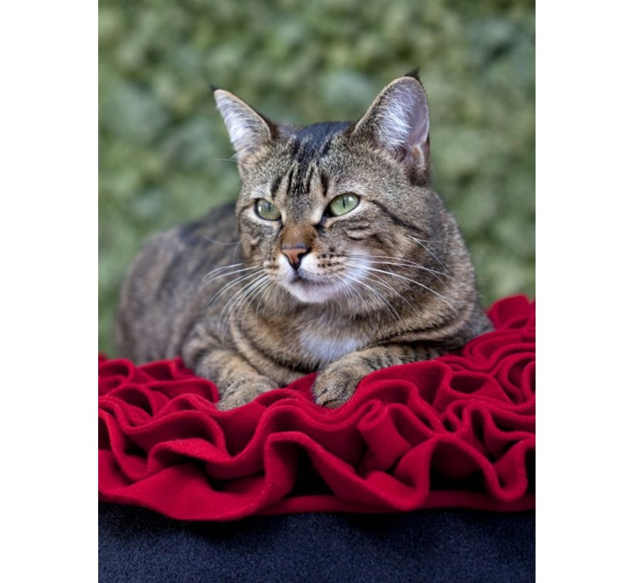 Kattenmand Rose