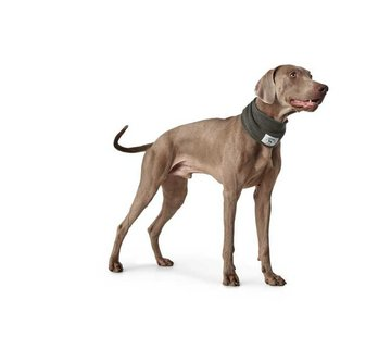 Hunter Dog Scarf Nancy Grey
