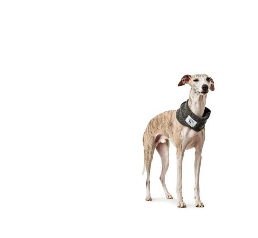 Hondensjaal Nancy Grijs