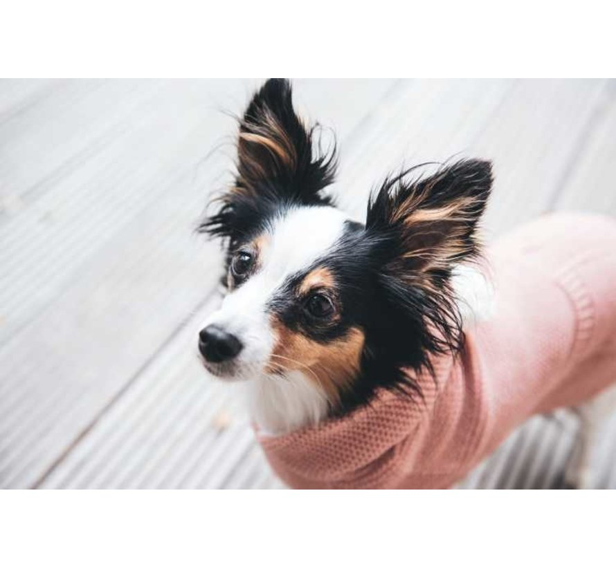 Dog Sweater Rögla Pink