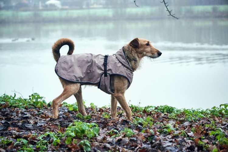 Hondenjas Uppsala Taupe