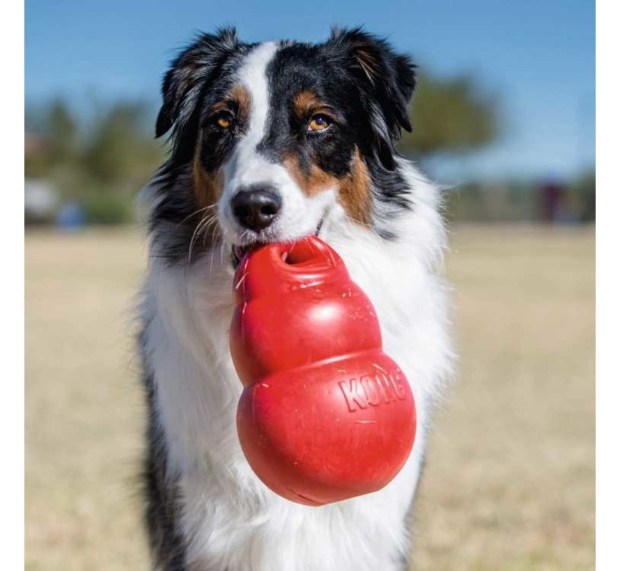 Dog Toy Bounzer