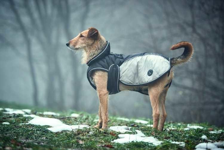 Hondenjas Uppsala Extreme Grijs