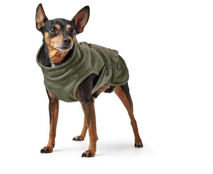 Hondenjas Uppsala Trend