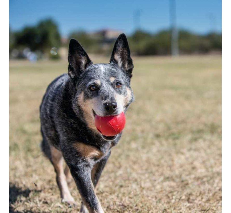 Hondenspeelgoed Ball