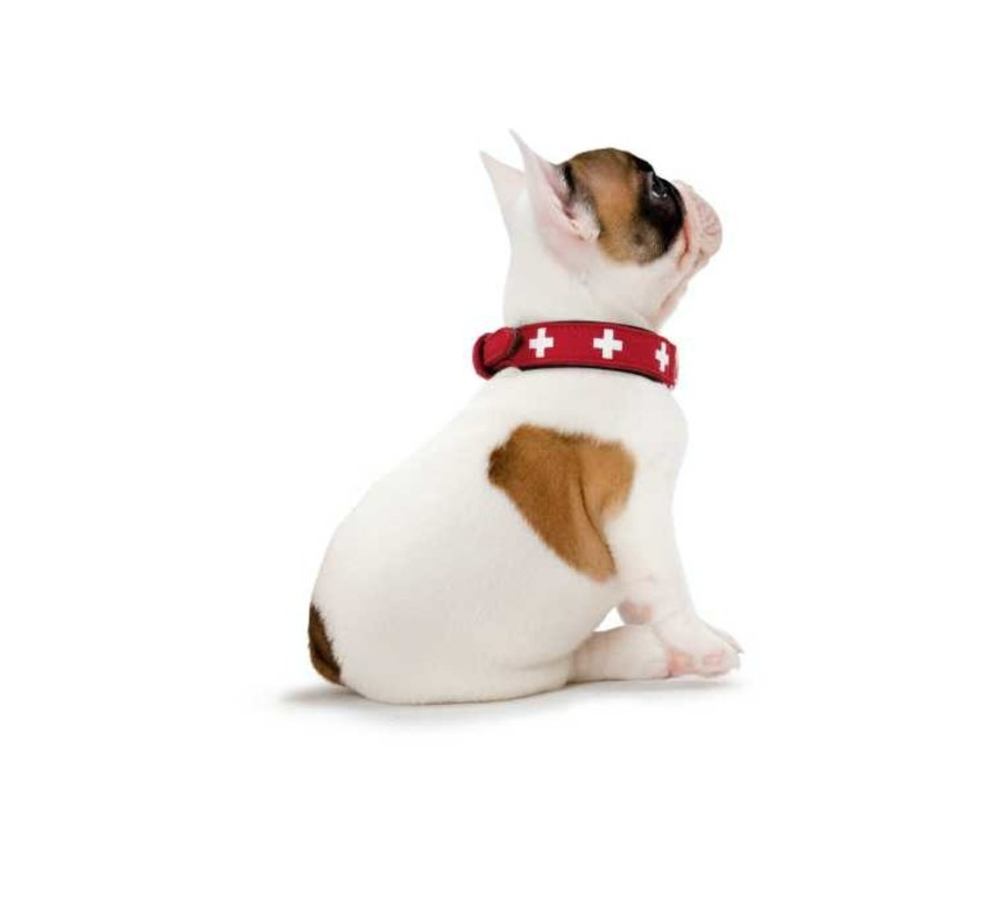 Dog Collar Swiss