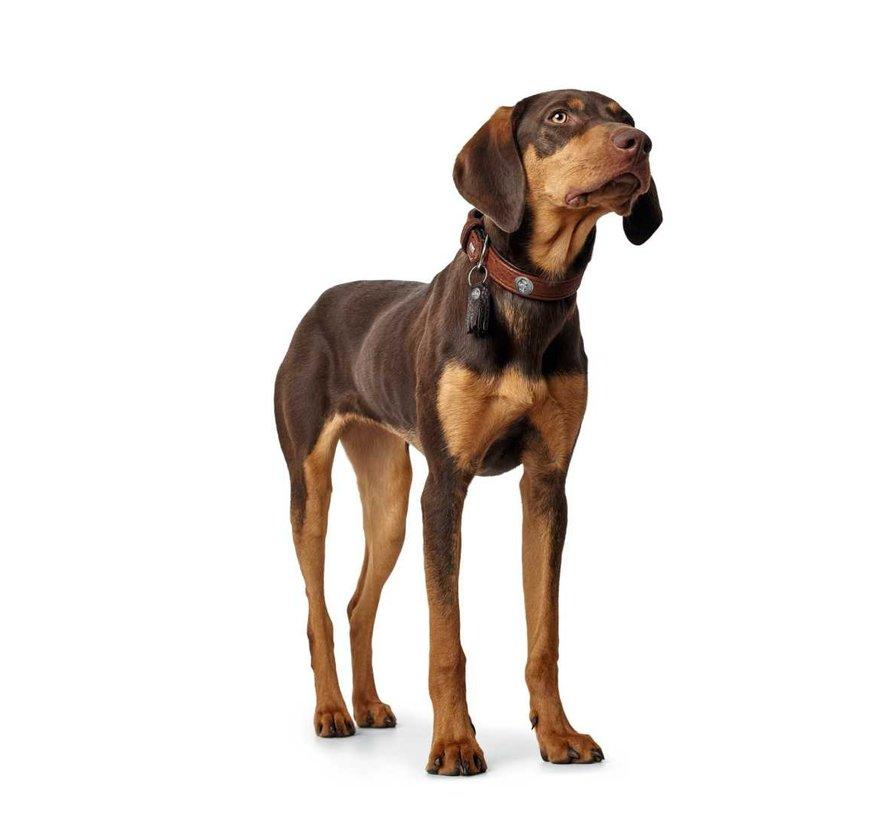 Hondenhalsband Cody Cognac