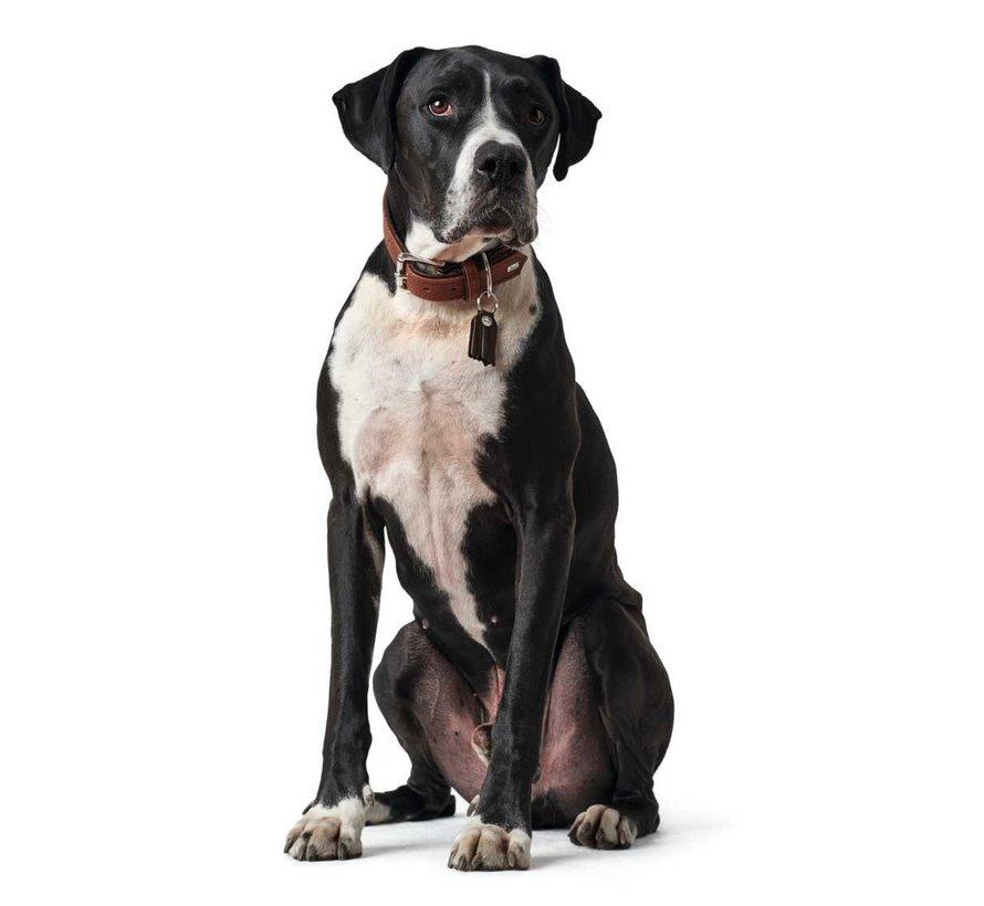 Dog Collar Cody Cognac