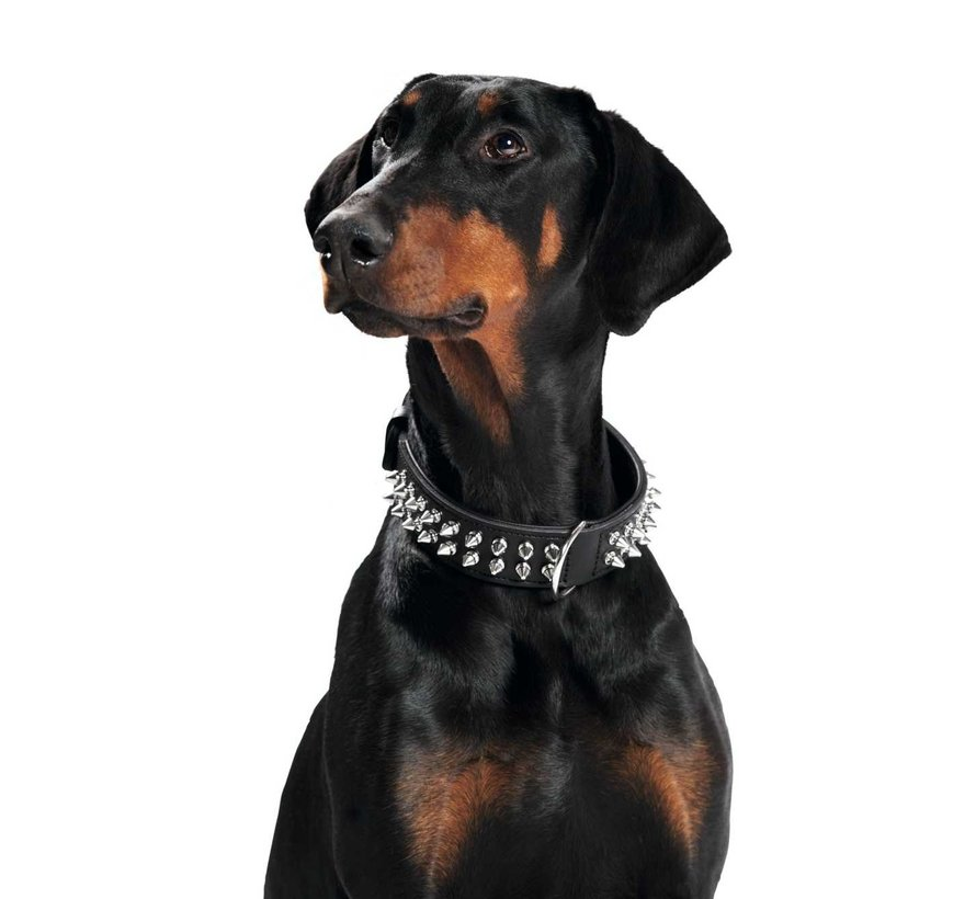 Dog Collar Rambo