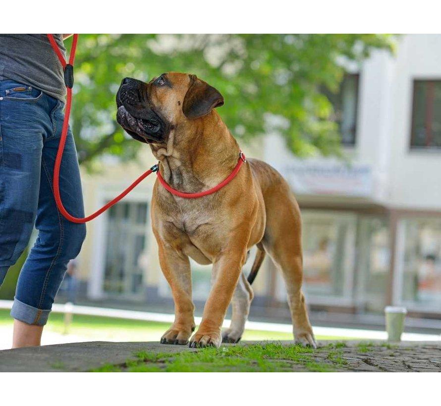 Dog Training Lead Retriever Red