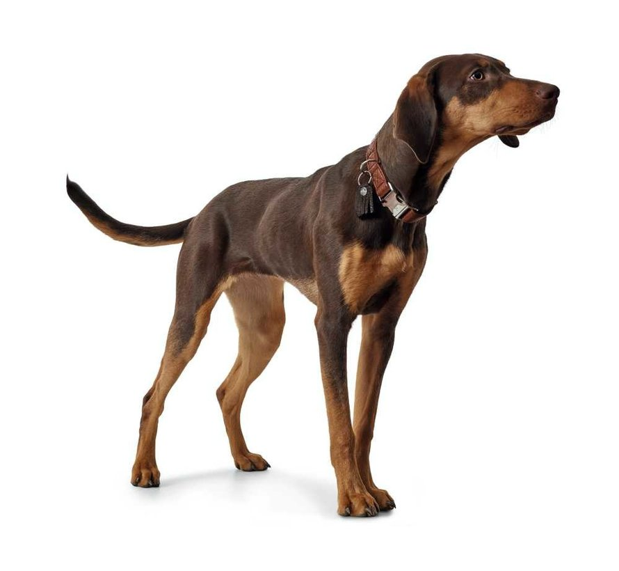 Hondenhalsband Cody Alu Strong Cognac