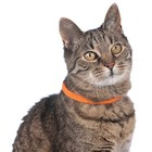 Hunter LED Cat Collar Yukon Orange