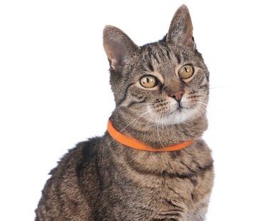 Hunter Lichtgevende Kattenhalsband Yukon Oranje