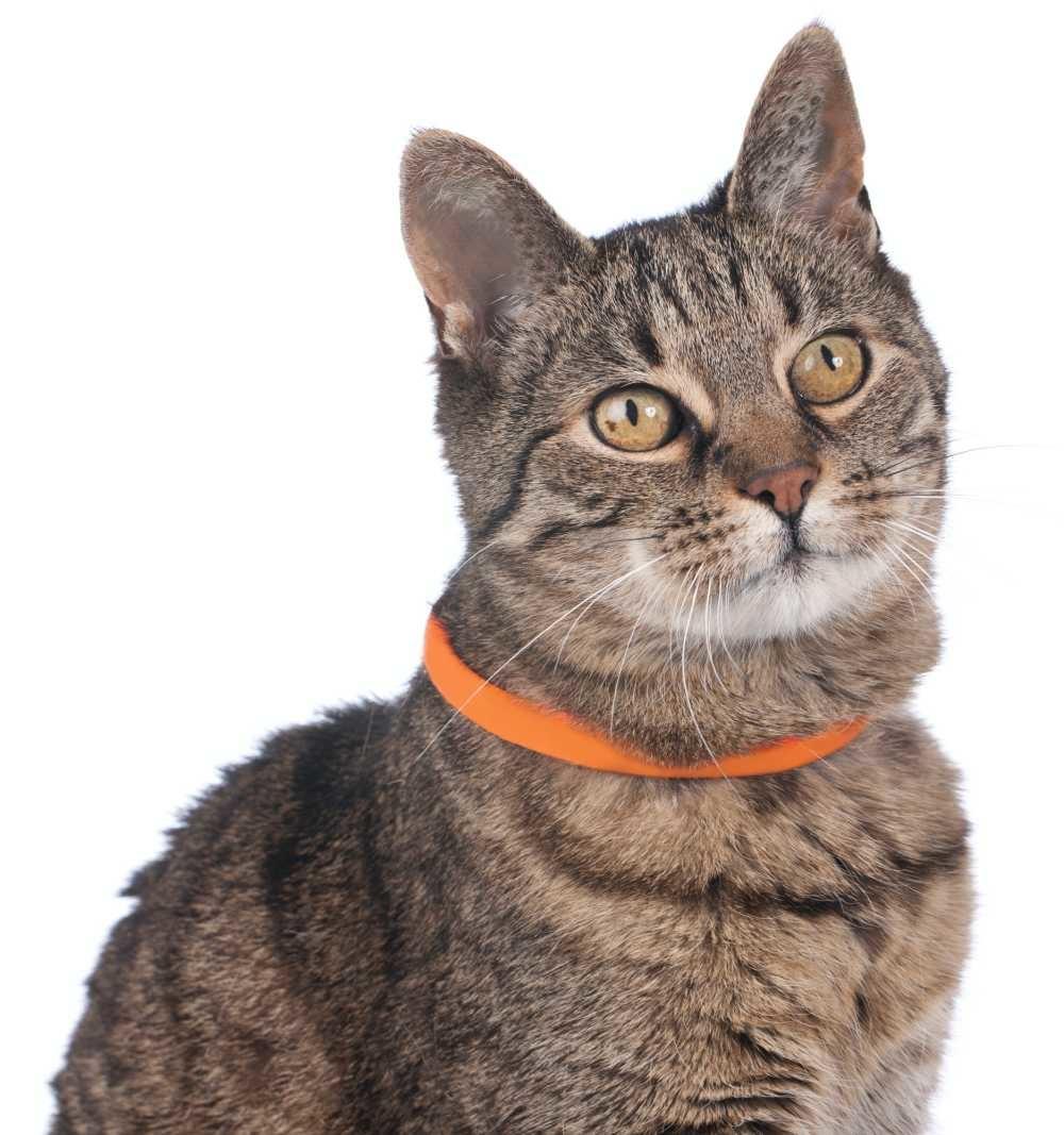 Lichtgevende Kattenhalsband Yukon Oranje