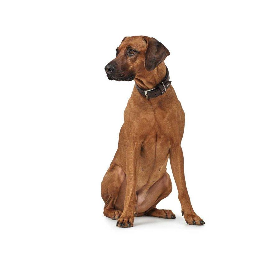 Dog Collar Larvik Dark Brown