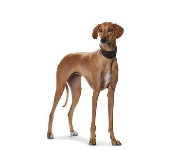Hunter Greyhound Collar Super Soft Dark Black