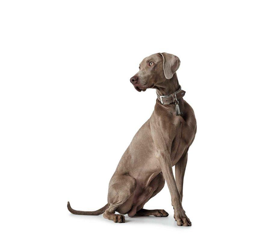 Dog Collar Lucca Walnut