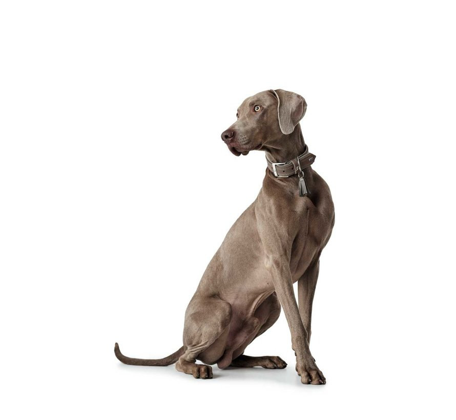 Hondenhalsband Lucca Walnoot