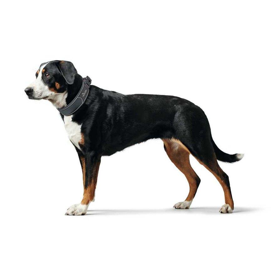 Hondenhalsband Divo Grijs