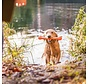 Hondenspeelgoed Echo Zwig Oranje
