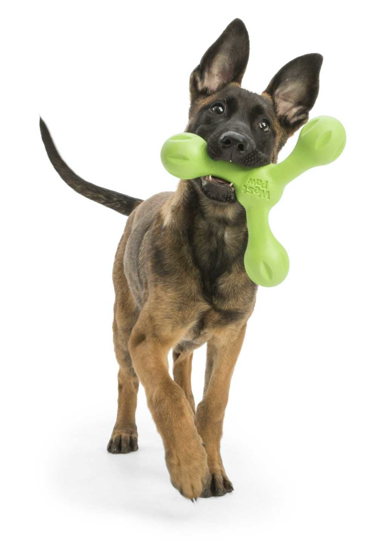 Hondenspeelgoed Echo Skamp Groen