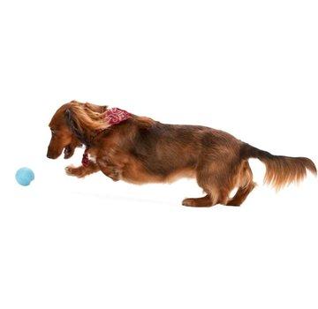 West Paw Design Dog Toy Zogoflex Jive Aqua