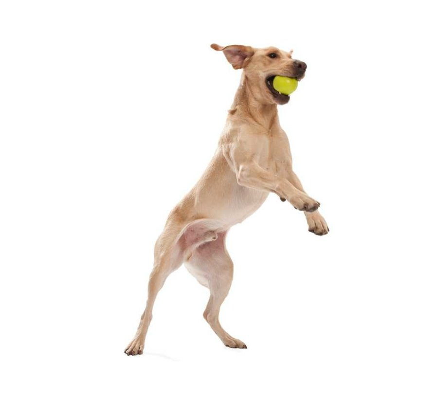 Dog Toy Zogoflex Jive Lime