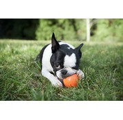 West Paw Design Dog Toy Zogoflex Jive Orange